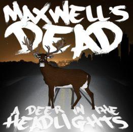 maxwells-dead-deer-in-the-headlights10-e1410545972466